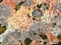 Lichen patterns 2682